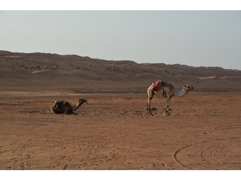 Deserto di Wahiba Sands